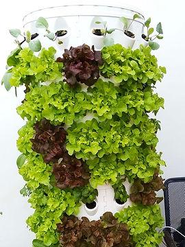 hydroponic-plants.jpg