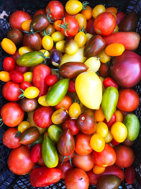 hearn-vale-veggies-tomatoes.jpg