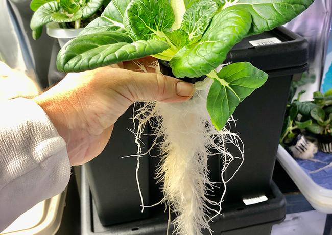 locally-grown-vegetables-10.jpg