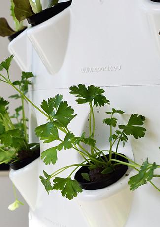 hydroponic-growing.jpg