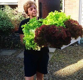 hearn-vale-veggies-grown-locally.jpg