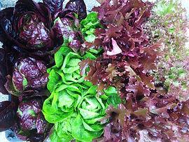 hearn-vale-produce.jpg