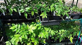 hearn-vale-plants.jpg