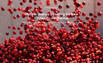 Climate change is coming for New England's cranberries