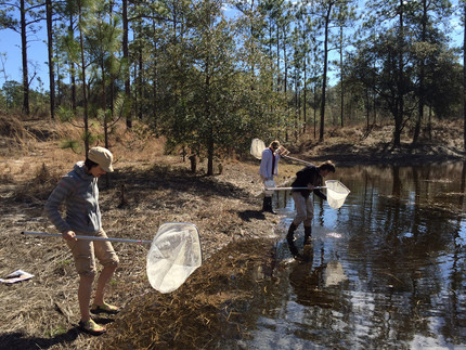 Citizen Science grad course at FSU and UF