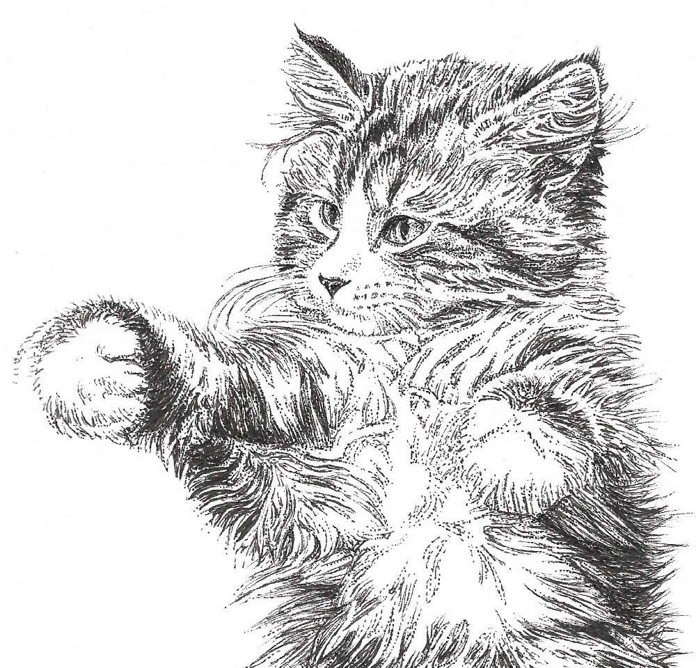 kitten%20Scan_edited.jpg