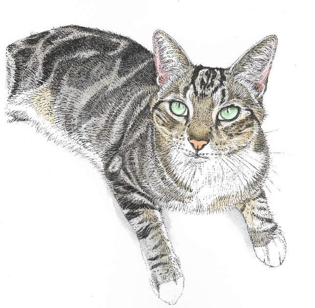 cat%20Scan_edited.jpg