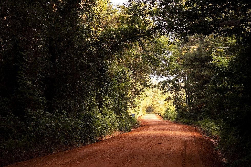 Alabama Nature 1.jpg