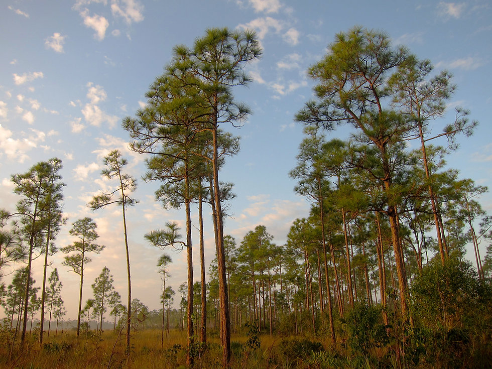 Florida nature1.jpg