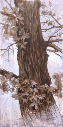 Maple, 100x50 cm, 2020