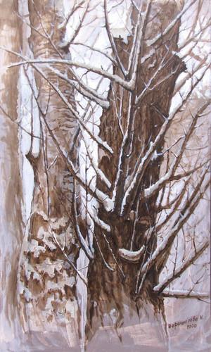 Ash-tree,100x60 cm, 2020