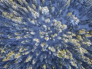 Visão sábia é a visão da floresta