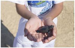 海龜保護計劃