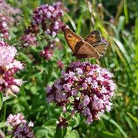 butterfly-2473738_1920-2000.jpg