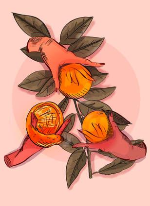 3 Magic Orange