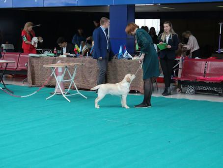 16.11.2018 - 18.11.2018, INTERNATIONAL DOG SHOWS BAKU