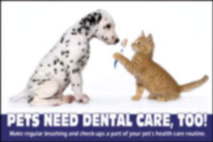 pet_dental_health.jpg