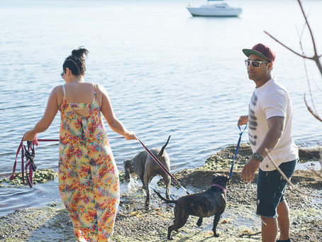 Fur Babies   Lake Macquarie Lifestyle Photographer