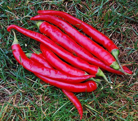 Large Red Thick Cayenne