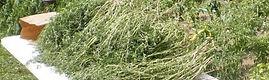 herbs, summer savoury, dried herbs