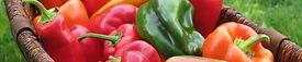 heirloom peppers, sweet pepper,