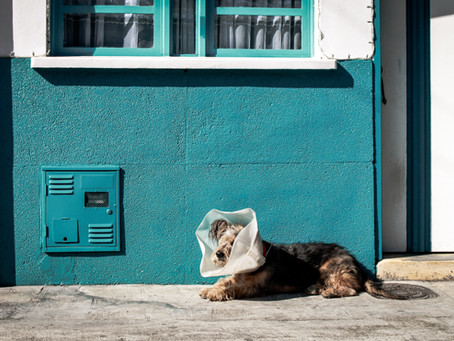 Fee versus Free: Animal Adoption