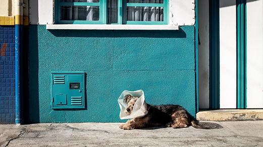 Pet Taxi Dog Taxi Vets