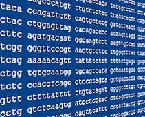 Loligo pealeii transcriptomes and draft genome released!