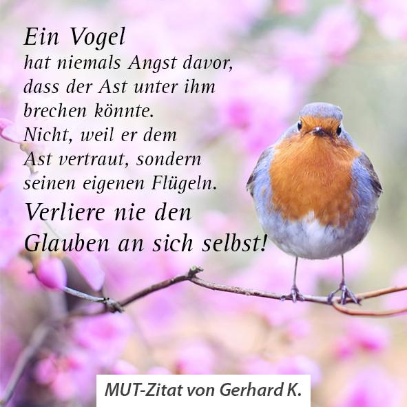 MUT Zitat Gerhard_K.jpg