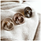 Thumbnail: Bibs Ivory - maat 3