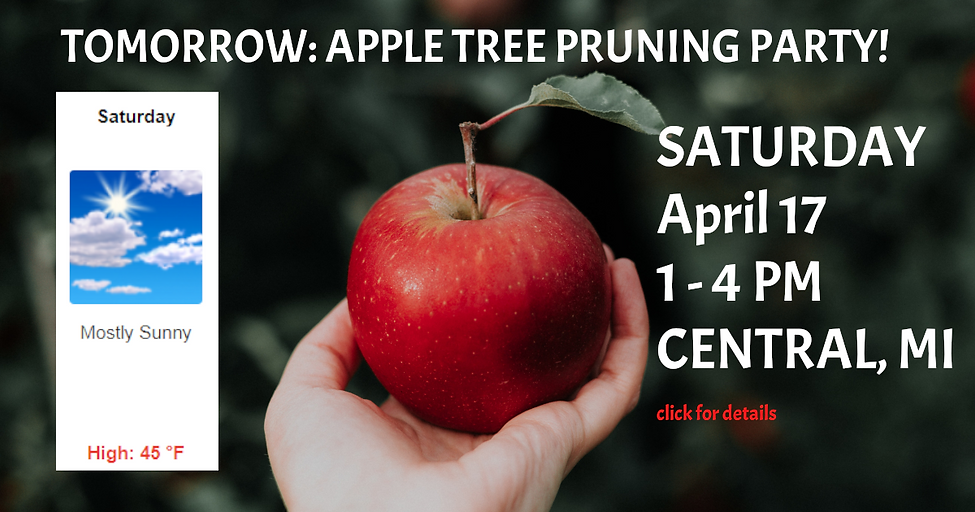 APPLE PRUNING EVENT2.PNG