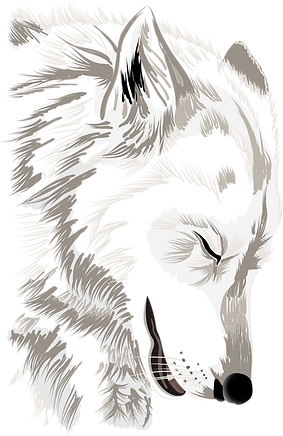 vlk.png