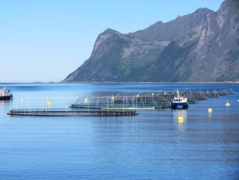 Fishfarm in a Norwegian fjord.jpg