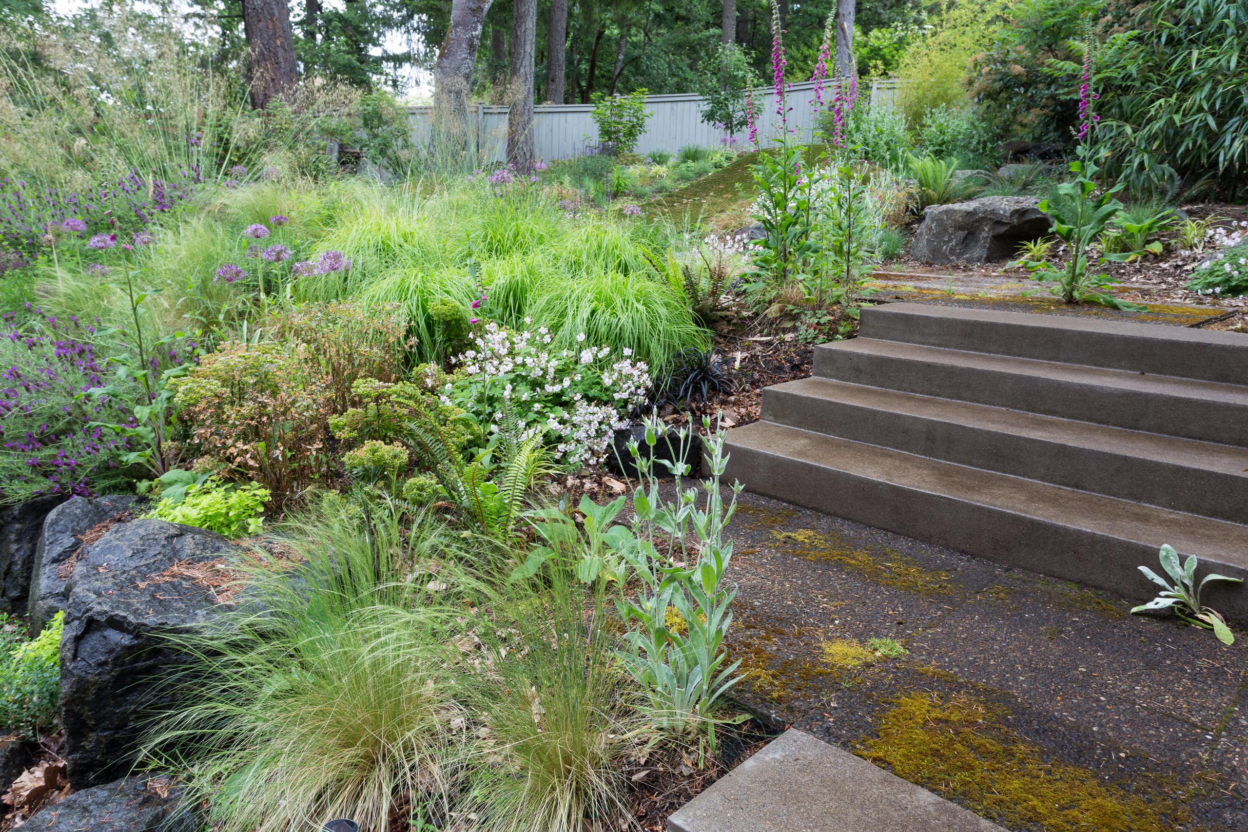 Garden Meadow SE Eugene-0351-web