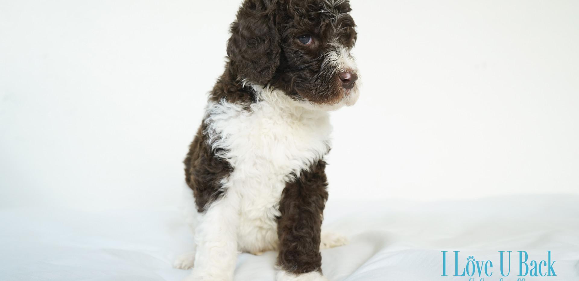 Pup-1.jpg