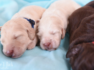 LillyPups-19.jpg
