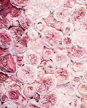 garden roses.jpg