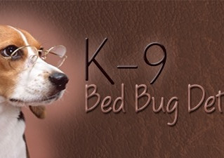Bed Bugs Are No Laughing Matter—Prevention Is Our Top Priority
