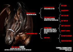 Stallion Card 2020