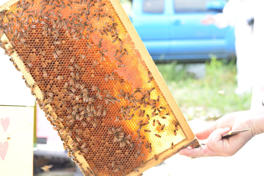 sacramento beekeeping