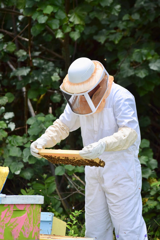 backyard sacramento beekeeper