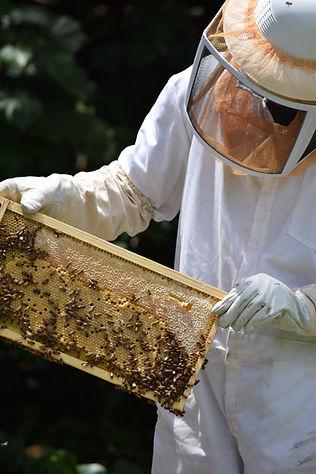 local sacramento beekeeper