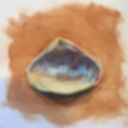 Hier _ _Clam Shell_.png