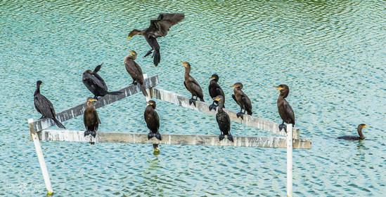Birding Center in South Texas