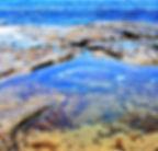 Tidal_Pool1 copy.jpg