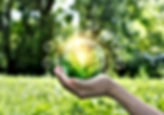 Hands protecting globe of green tree on