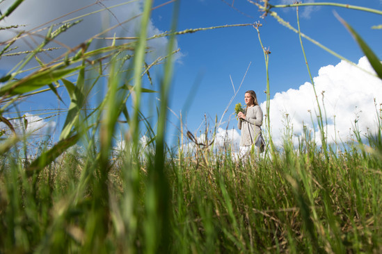 Through the Grass