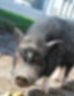 Wilbur.jpg