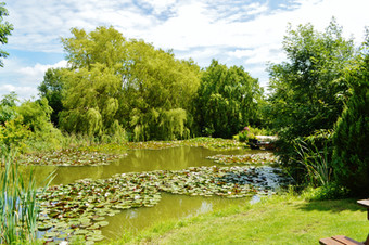 Beautiful garden and pond