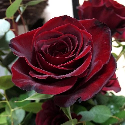 Роза Черная Магия (Чайно-гибридная) 3л